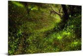 Vuurvliegjes op de bemoste bodem van een bos Aluminium 90x60 cm - Foto print op Aluminium (metaal wanddecoratie)