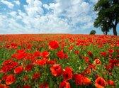 Papermoon Red Poppy Field Vlies Fotobehang 200x149cm 4-Banen