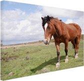 Paard staat in gras Canvas 30x20 cm - Foto print op Canvas schilderij (Wanddecoratie)