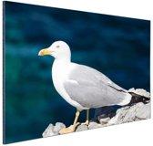 Profiel meeuw op rots Aluminium 60x40 cm - Foto print op Aluminium (metaal wanddecoratie)