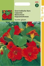 Hortitops Zaden - Tropaeolum Scarlet Gleam Rood
