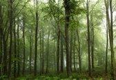 Fotobehang Forest|V8 - 368cm x 254cm|Premium Non-Woven Vlies 130gsm
