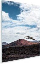 Zeemeeuw vliegt over het Nationaal park Timanfaya op Lanzarote Plexiglas 60x90 cm - Foto print op Glas (Plexiglas wanddecoratie)