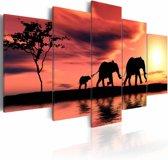 Schilderij - Olifanten in Afrika