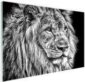 Leeuw in de winter  Glas 90x60 cm - Foto print op Glas (Plexiglas wanddecoratie)