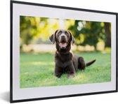 Foto in lijst - Een Labrador Retriever ligt in het gras fotolijst zwart met witte passe-partout klein 40x30 cm - Poster in lijst (Wanddecoratie woonkamer / slaapkamer)