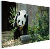 FotoCadeau.nl - Grote panda Glas 120x80 cm - Foto print op Glas (Plexiglas wanddecoratie)