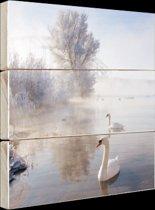 FotoCadeau.nl - Zwanen in de winter Hout 100x100 cm - Foto print op Hout (Wanddecoratie)