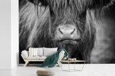 Fotobehang vinyl - Schotse hooglander kalf zwart wit breedte 540 cm x hoogte 360 cm - Foto print op behang (in 7 formaten beschikbaar)