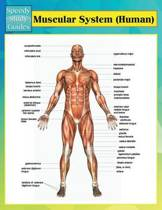Muscular System (Human) (Speedy Study Guides)