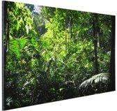 Regenwoud Brazilie  Aluminium 90x60 cm - Foto print op Aluminium (metaal wanddecoratie)