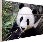 Etende panda Hout 30x20 cm - Foto print op Hout (Wanddecoratie)