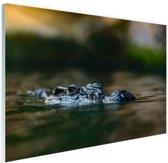 Krokodil aan de oppervlakte Glas 120x80 cm - Foto print op Glas (Plexiglas wanddecoratie)