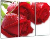 Glasschilderij Roos   Rood, Wit, Groen   120x80cm 3Luik   Foto print op Glas    F000668