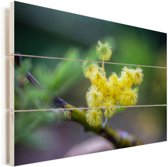 Een kleine mimosabloem met een wazige achtergrond Vurenhout met planken 90x60 cm - Foto print op Hout (Wanddecoratie)