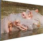 Nijlpaarden naast elkaar Aluminium 90x60 cm - Foto print op Aluminium (metaal wanddecoratie)