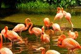 Papermoon Pink Flamingos Vlies Fotobehang 300x223cm 6-Banen