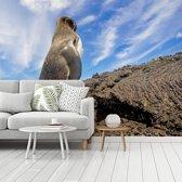 Fotobehang vinyl - Een galapagospinguïn op het vaste land breedte 350 cm x hoogte 260 cm - Foto print op behang (in 7 formaten beschikbaar)