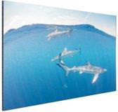 Haaien aan de oppervlakte Aluminium 30x20 cm - klein - Foto print op Aluminium (metaal wanddecoratie)