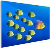School tropische vissen Glas 180x120 cm - Foto print op Glas (Plexiglas wanddecoratie) XXL / Groot formaat!