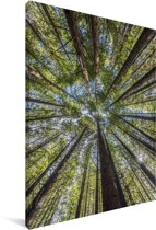 Het Redwoodbos bij Whakarewarewa in Nieuw-Zeeland Canvas 120x180 cm - Foto print op Canvas schilderij (Wanddecoratie woonkamer / slaapkamer) XXL / Groot formaat!