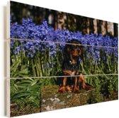 Een Cavalier King Charles-spaniël tussen de blauwe bloemen Vurenhout met planken 90x60 cm - Foto print op Hout (Wanddecoratie)