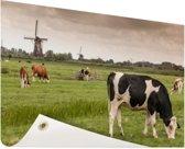 Grazende koeien op een dijk Tuinposter 60x40 cm - klein - Tuindoek / Buitencanvas / Schilderijen voor buiten (tuin decoratie)