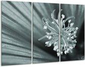 Glas schilderij Bloem | Grijs, Groen | 120x80cm 3Luik | Foto print op Glas |  F006472