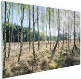 Berkenbomen in Europa Glas 60x40 cm - Foto print op Glas (Plexiglas wanddecoratie)