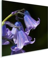 Close-up van de paarse bloemen van een sterhyacint Plexiglas 50x50 cm - Foto print op Glas (Plexiglas wanddecoratie)