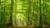 Fotobehang - Bos in voorjaar - 450x260 cm. Vliesbehang 150 grams A-Kwaliteit. Art. F007.13