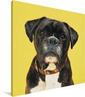 Boxer met een gele achtergrond Canvas 90x90 cm - Foto print op Canvas schilderij (Wanddecoratie woonkamer / slaapkamer) / Huisdieren Canvas Schilderijen