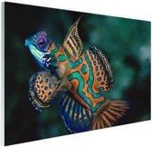 Veelkleurige vis Glas 30x20 cm - klein - Foto print op Glas (Plexiglas wanddecoratie)