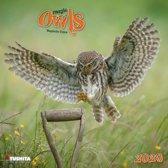 Uilen - Magic Owls Kalender 2020