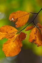 Single Leaf Journal
