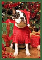 Santa's Little Helper Boxed Holiday Notecards