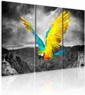 Schilderij - Vogel-van-paradijs