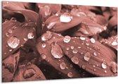 Schilderij | Canvas Schilderij Bloem, Druppel | Rood, Bruin | 120x70cm 1Luik | Foto print op Canvas