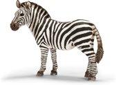 Zebra, Vrouwelijk