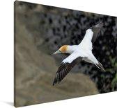 Luchtfoto van een zwevende Jan-van-gent Canvas 180x120 cm - Foto print op Canvas schilderij (Wanddecoratie woonkamer / slaapkamer) XXL / Groot formaat!