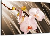 Canvas schilderij Orchidee | Bruin, Roze | 140x90cm 1Luik