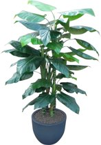 Kunstplant Philodendron met sierpot Eggy45 antraciet
