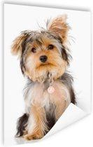 Portret van Yorkshire terrier Poster 80x120 cm - Foto print op Poster (wanddecoratie woonkamer / slaapkamer) / Dieren Poster