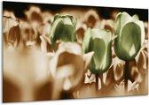 Glasschilderij Tulpen   Bruin, Groen, Wit   120x70cm 1Luik   Foto print op Glas    F002774