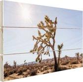 Woestijn met bomen Hout 160x120 cm - Foto print op Hout (Wanddecoratie) XXL / Groot formaat!