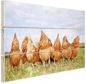 Kippen in het veld Hout 80x60 cm - Foto print op Hout (Wanddecoratie)