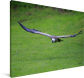 Vale gier vliegt over een gifgroen grasveld Canvas 140x90 cm - Foto print op Canvas schilderij (Wanddecoratie woonkamer / slaapkamer)