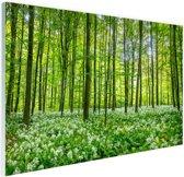 Groene bomen in het bos Glas 90x60 cm - Foto print op Glas (Plexiglas wanddecoratie)