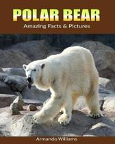 Polar Bear: Amazing Facts & Pictures