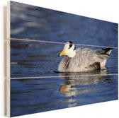 Indische gans zwemt in rustig water Vurenhout met planken 60x40 cm - Foto print op Hout (Wanddecoratie)